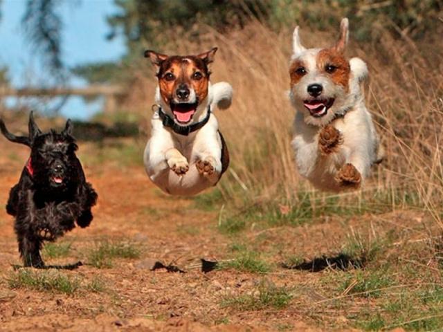 Что на самом деле нужно нашим собакам?