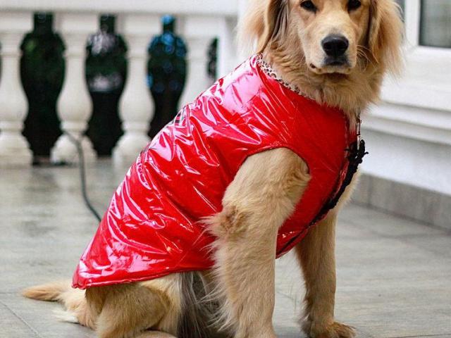 Нужен ли теплый костюм вашему питомцу